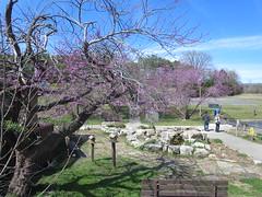 IMG_0914 (Michael Jordan Cheatham) Tags: branson summer time pretty tree fish farm