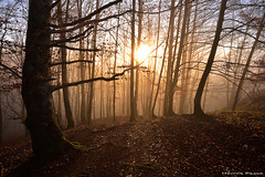Touching the light (Hector Prada) Tags: bosque niebla amanecer dorado luz otoño hojas arboles leaves colours woods forest fog dawn golden light sun mist magic moment autumn trees sunrise basquecountry paisvasco
