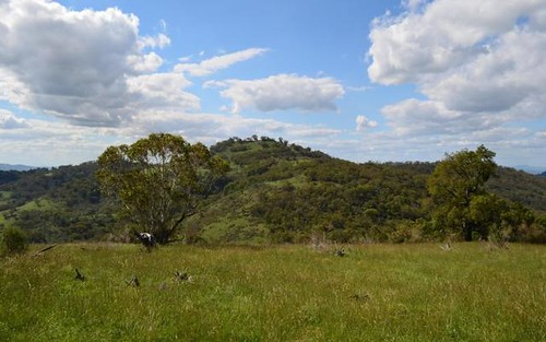 Philips Creek Road, Willow Tree NSW 2339
