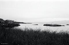Image-177.jpg (Satya_Kommini) Tags: solo 2017 solitude saxepointpark leica victoriabc canada pacificnorthwest britishcolumbia film leica50elmar28ltm bw kodaktrix pushedto800