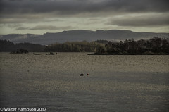 20170102-_K505535-Edit (Pictures by Walter) Tags: 01january intrepids luss pentaxk50 picturesbywalter scotland walterhampson walterhampsonhotmailcom unitedkingdom gb