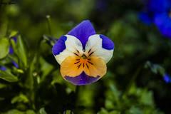 Textura (Jotha Garcia) Tags: jothagarcia jardin garden madrid spain españa flor flower primavera spring march marzo bokeh 2017 nikond3200 nikkor180550mmf3556 textura texture profundidaddecampo macro macrografia closeup