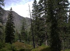 07-IMG_8395.CR2 (hemingwayfoto) Tags: österreich alpen austria baum europa felsen fichte hohetauern landschaft nationalpark natur naturschutzgebiet rauris rauriserurwald reise spitzfichte tannenbaum urwald wald