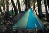 tent city (gnarlydog) Tags: tent blackdiamondmegalight camping australia backlit adaptedlens refittedlens russianlens projectionlens 35kp18120 manualfocus contrejour travellight forest morning softlight transparent