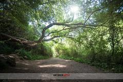 SENDERO DEL RIO MAJACEITE (Antonio López Fotografía) Tags: majecite rio sendero andalucia cadiz el bosque