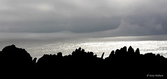 Silhuett mot Barentshavet (irene.holmen) Tags: silhouette barentståke hav ocean sea sjø silver sølv black fog foggy tåke varangerhalvøya finnmark norge norway nordnorge nothernorway stein klipper kyst coast skyer barentshavet nordkalotten arctic arktis geologi nature shore