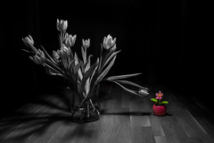 nice to meet you.. ([-ChristiaN-]) Tags: tulip tulips tulpe plastic artificial dark bw blackandwhite black white colorkey encounter alien strange robot