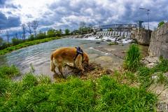 2017-04-15_12-53-06 (der.dave) Tags: 2017 april feste fisheye frühling nachmittag niederösterreich ostern parties peisching wolkig bewölkt nachmittags österreich