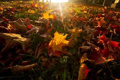 It's TBT Somewhere... (Matt Champlin) Tags: random fall tbt throwbackthursday leaf leaves sun sunset cemetery life death rebirth canon 2015