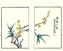 Wintersweet (Japanese Flower and Bird Art) Tags: flower wintersweet chimonanthus praecox calycanthaceae shinroku yano nagasaki woodblock picture book japan japanese art readercollection