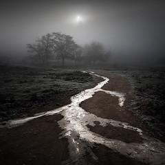 Frozen silence II (ilias varelas) Tags: ilias varelas mood mist light landscape land atmosphere nature greece frozen fog silence trees travel sun winter