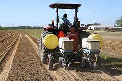 Peanut Planting 7 (UGA College of Ag & Environmental Sciences - OCCS) Tags: uga tifton campus peanuts planting