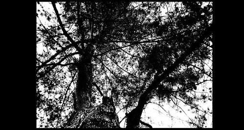 ...ağaç..