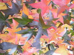 tons de outono III