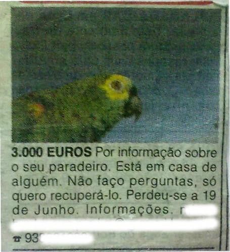 papagaio desaparecido