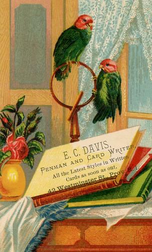 E. C. Davis, Penman and Card Writer, Providence, Rhode Island