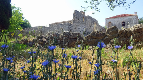 Nekromanteion Oracle of Ephyra Flowers