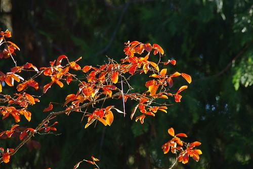Harbinger of Autumn