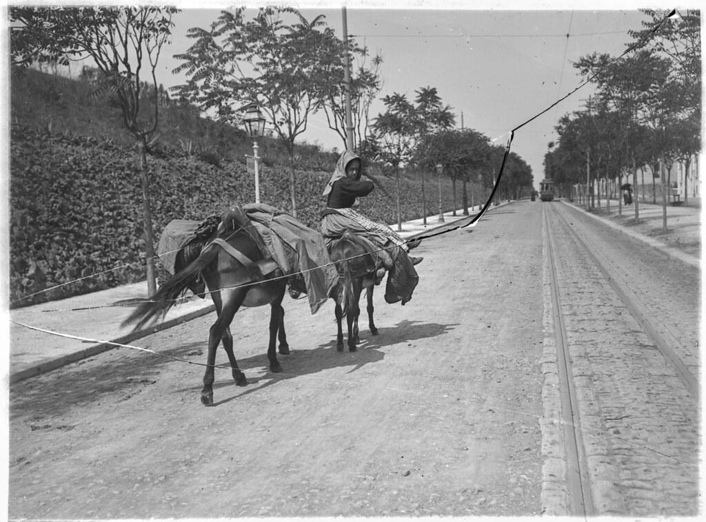Cigana com burros, Lisboa (J. Benoliel, 1909)