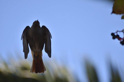Ventotene: the island of migration Autumn