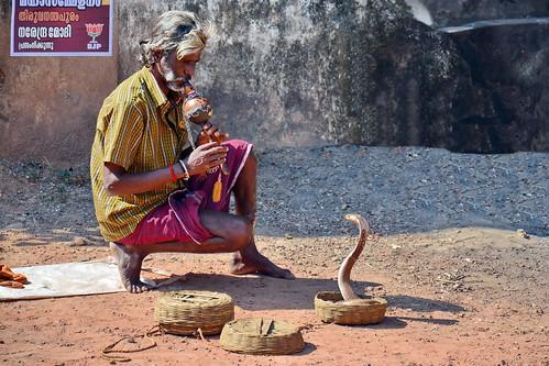 India - Kerala - Varkala - Snake Charmer - 4