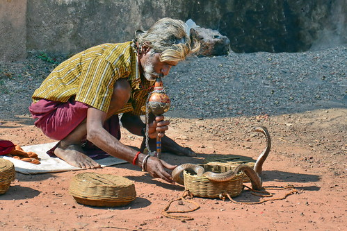 India - Kerala - Varkala - Snake Charmer - 2