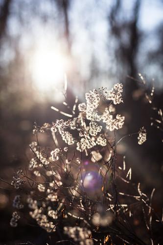 December 20: Wintery Light