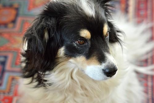 OUR DOG PHILETTA: