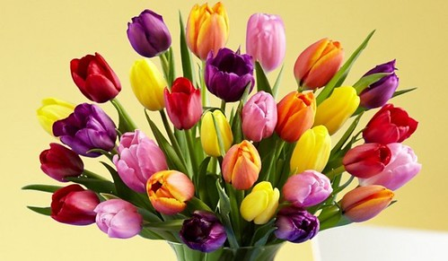 Quiz: How Much Do You Know about What Do Different Types Of Flowers Mean?   what do different types of flowers mean