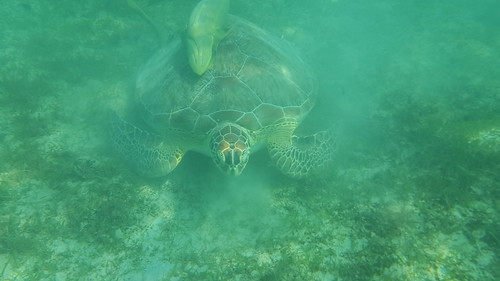 Swam with berracuda, baby and full grown nurse shark, 2 kinds of rays, the biggest sea turtle, an Octopus, and fishes galore!
