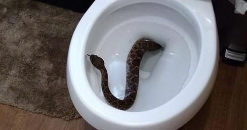 Top 10 Toilettenschrecken