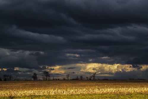Golden Field Storm...