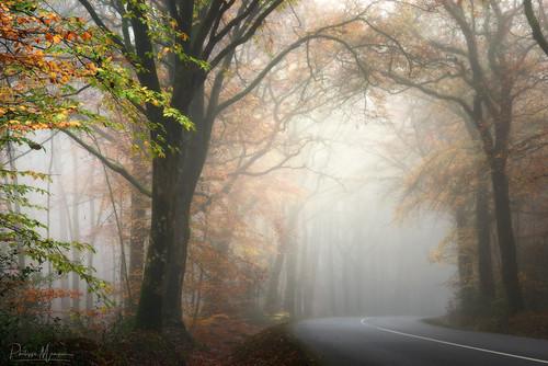 Déambulations forestières