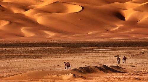 Camel-Karawane