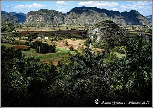 Esperant als dinosaures.   (Pinar del Rio - Cuba).