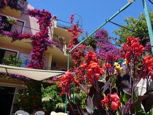 Bari sardo (Ogliastra) - Flowers