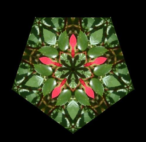 Kaleidoscope Red Rose 14