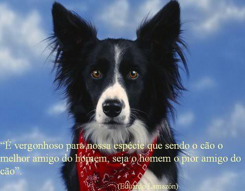 NOSSOS MELHORES AMIGOS DO BEM!...***..OUR BEST FRIENDS OF GOOD!