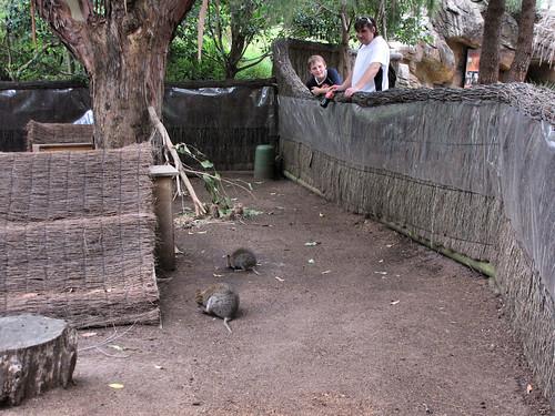 quokka enclosure