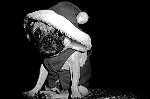 Santa's little trouble maker . . .