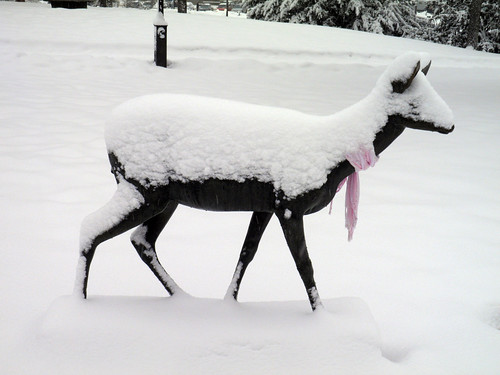 Deer in snow - neither Pigs in space nor Lark's tongues in aspic