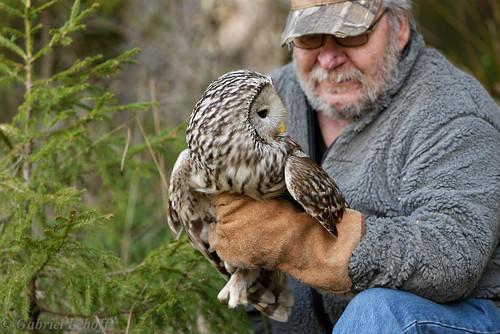 Chouette de l'Oural Ural Owl 0701