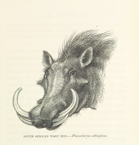 Image taken from page 103 of 'Matabele Land and the Victoria Falls. A naturalist's wanderings in the interior of South Africa. From the letters and journals of the late Frank Oates, F.R.G.S. Edited by C. G. Oates. (Memoir.)'