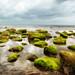Seton Sands rocky beach