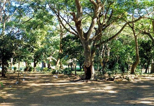 200705.0526.fidschi.vitilevu.nandele