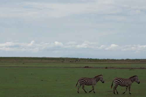 Tanzania+Kenya-31