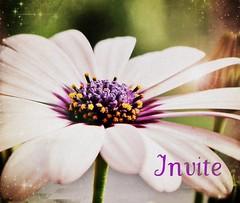 invite code by Adriënne, on Flickr
