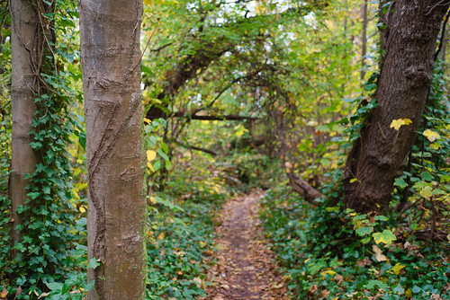 Ashburton scarred tree?