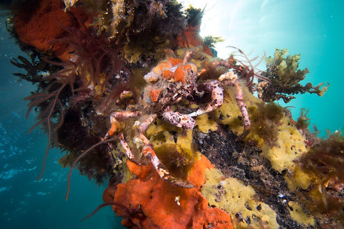 Jetties - magnets for marine life #marineexplorer #GSRfieldtrip #UNSWbees
