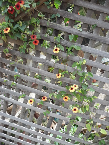 flowering vine 5 8 19